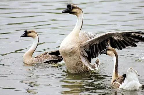 动物 鸟 鸟类 498